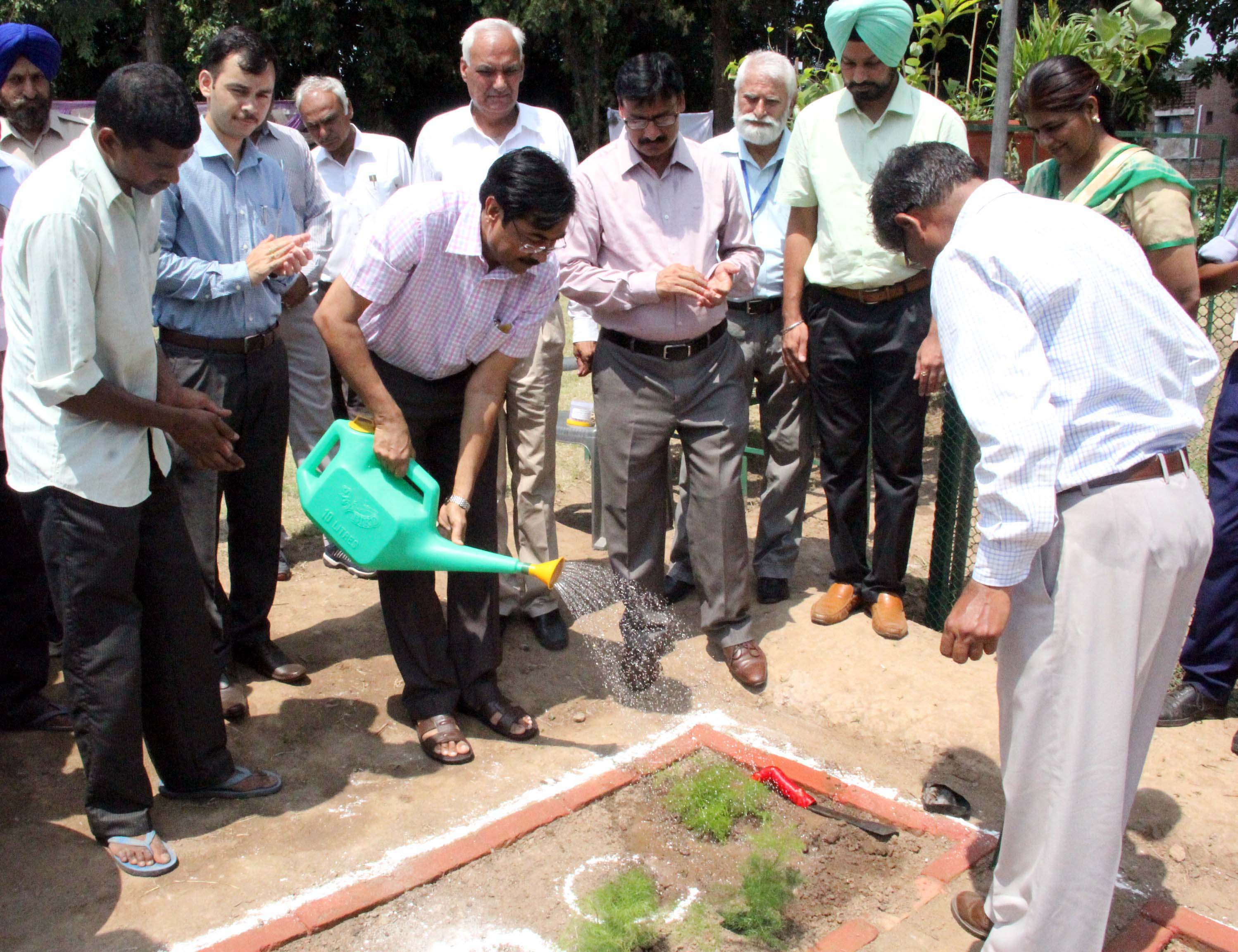 UT Home Secretary, Mr. Anil Kumar sprinkling water on the sapling of SHATAVARI on the celebration of HERBAL DAY -2014 at Rose Nursery, Sector-23, Chandigarh on Wednesday, July 30, 2014.